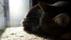 Ygraine asleep in the sunlight
