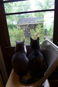 The Ladies at their window