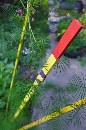 cypress vine creeping
