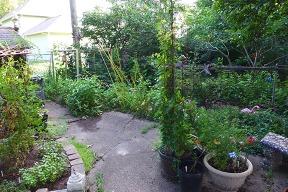west side of garden