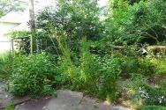zinnias and cypress vines