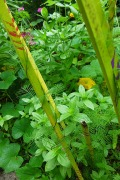 small zinnias and squash