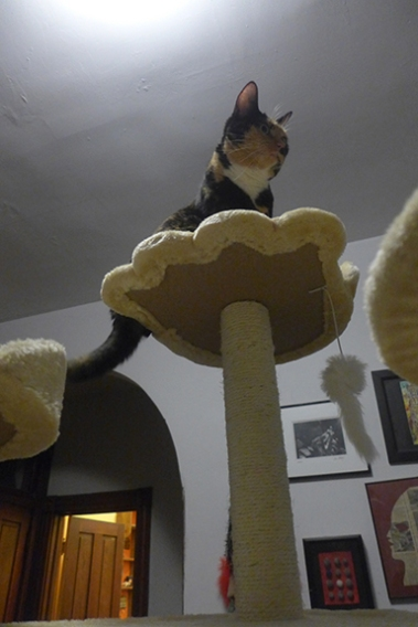 Queen of the Cat Tree
