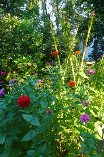 view of the zinnias