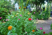 more of the zinnias