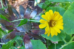 yellow flower and metal flower