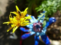 marigold and blue flower