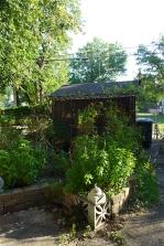 a bit of my garden