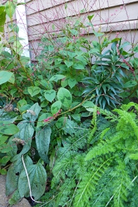 East garden vignette