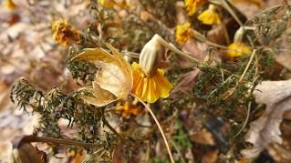 marigolds and a leaf