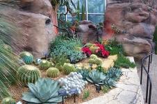 desert room with poinsettias