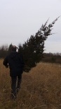 taking our tree home