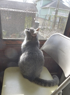 Ygraine at her window