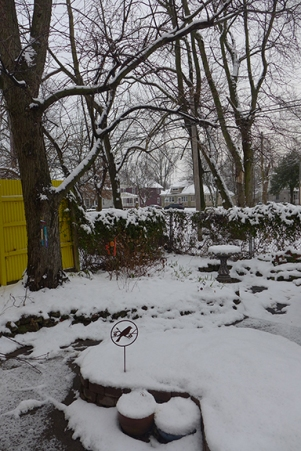 My yard in the snow