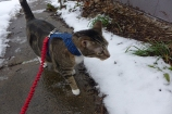 Perry takes a snowy walk