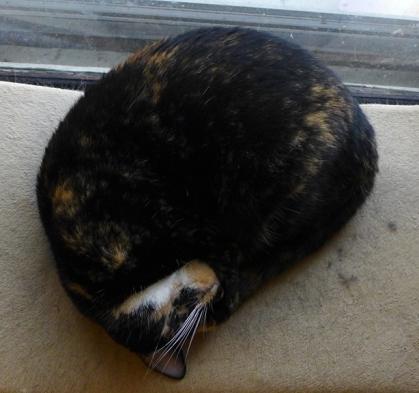 the Tight Ball nap configuration