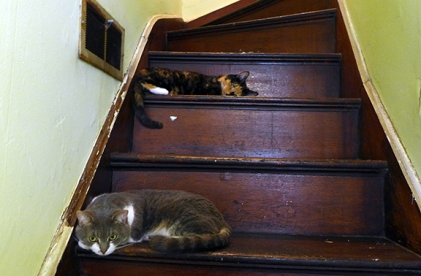 cats 22