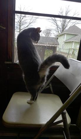 cats 31
