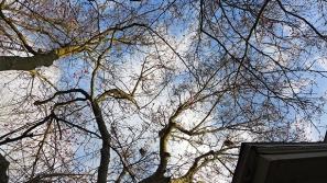 barren magnolia branches