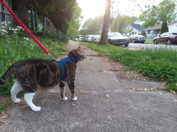 Perry out for a walk