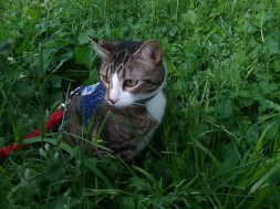 Perry in the grass