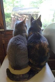 cats 06