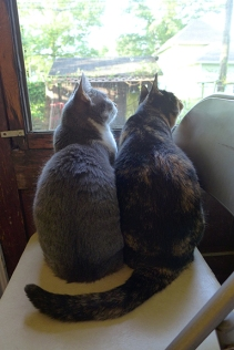 cats 07