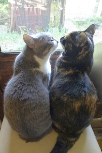 cats 08