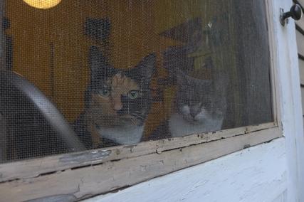 cats 09