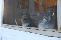 cats 10