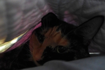 Lady Morgaine in her burrow