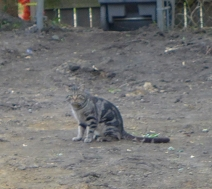 One of the neighbor's cats was shocked at what he found at home after a day of roaming