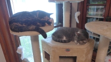 more napping in formation