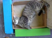 Captain Scrappy in his box