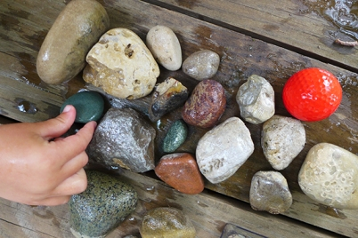our special finds while searching for Petoskey Stones