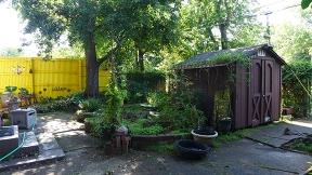 a look at my yard