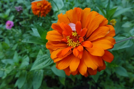 zinnia upon our return
