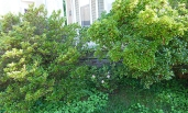 spot the tiny azalea