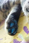 A blue Paw