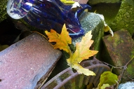 leaf and art