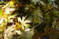 a birdbath full of leaves