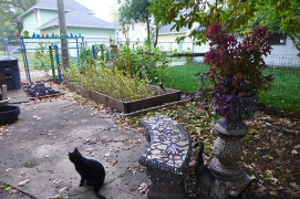 garden view with cats