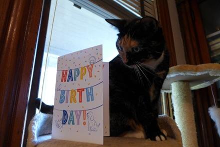 Morgaine's birthday! She's 6!