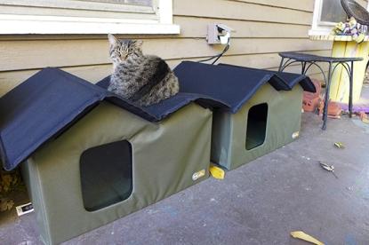 A Junior enjoys his heated cat house