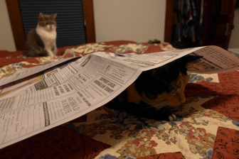Lady Morgaine loves paper