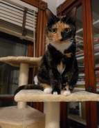 Lady Morgaine on her perch