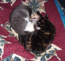 kitty pile 1