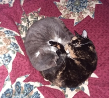 kitty pile 3
