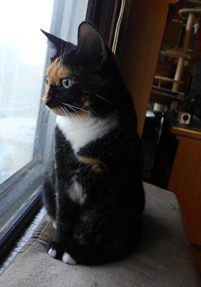 Lady Morgaine gazes outdoors