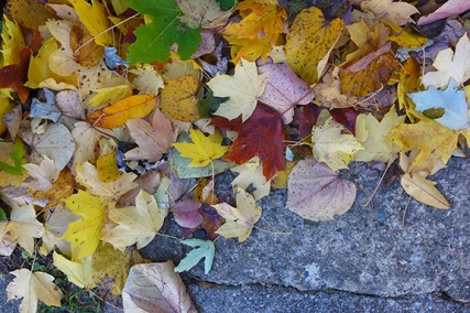 leaves begin to fall